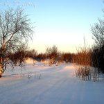 Ягры в зимнем солнце
