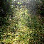 Лес пригорода Северодвинска