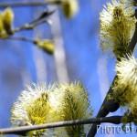 Весенняя пыльца