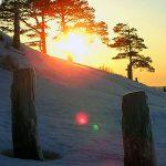 низкое зимнее солнце и сосны