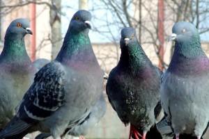 Важные птицы