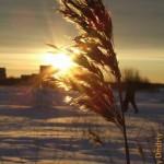 На морозном ветру