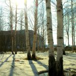 ДЮЦ за деревьями