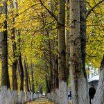 ул. Мира, парк