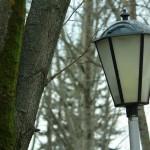 дерево и фонарь