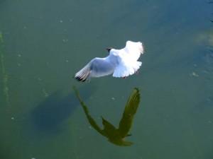 Три чайки (Птицы северодвинска)