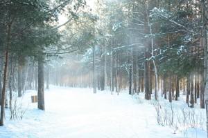 зимний Ягринский бор