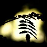 Светлое в темном - Лето 2011