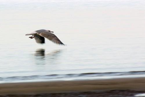 Чайка над белым морем
