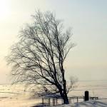 Могила на берегу Белого моря - зима 2013