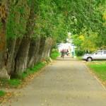 Ул. Дзержинского - Осень 2013 (Фото города Северодвинска)