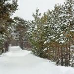 Ягринский бор - зима 2014