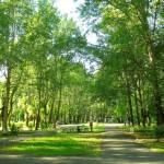 Зеленый парк (Сквер ветеранов)