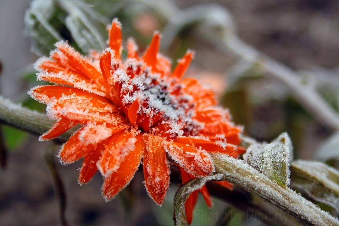 Первые заморозки - осень 2014