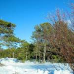 Ягринский бор - зима 2015