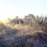 Ягры и первый снег