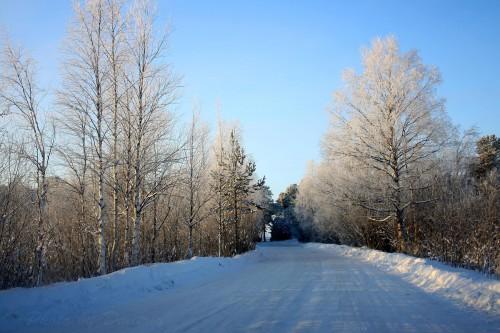 Ягринский бор зимой