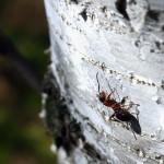 Первые муравьи