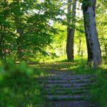 Лестница в старом парке