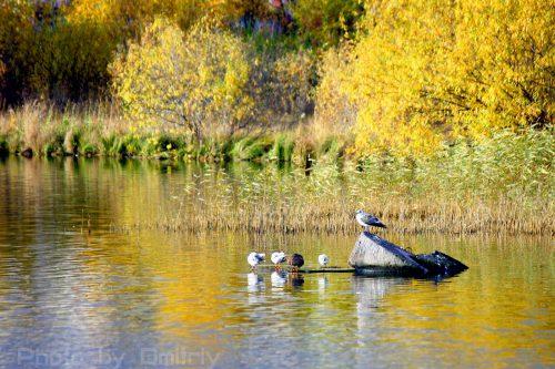 Осенние птицы