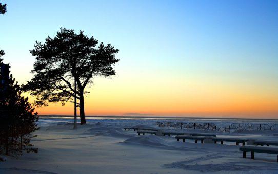 Дерево в зимнем закате