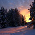 Сказочный зимний лес