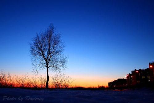 Дерево и закат у реки Кудьма