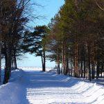 Дорога к Воинскому мемориальному комплексу