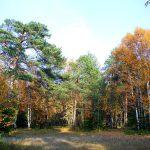 Осенний ягринский бор