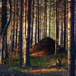 Муравейник в осеннем лесу